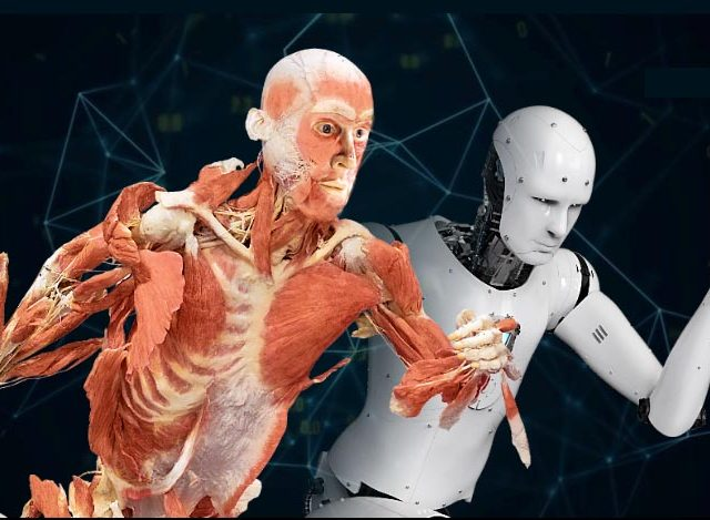 HealthQE at Event REAL BODIES - Scientific Exhibition